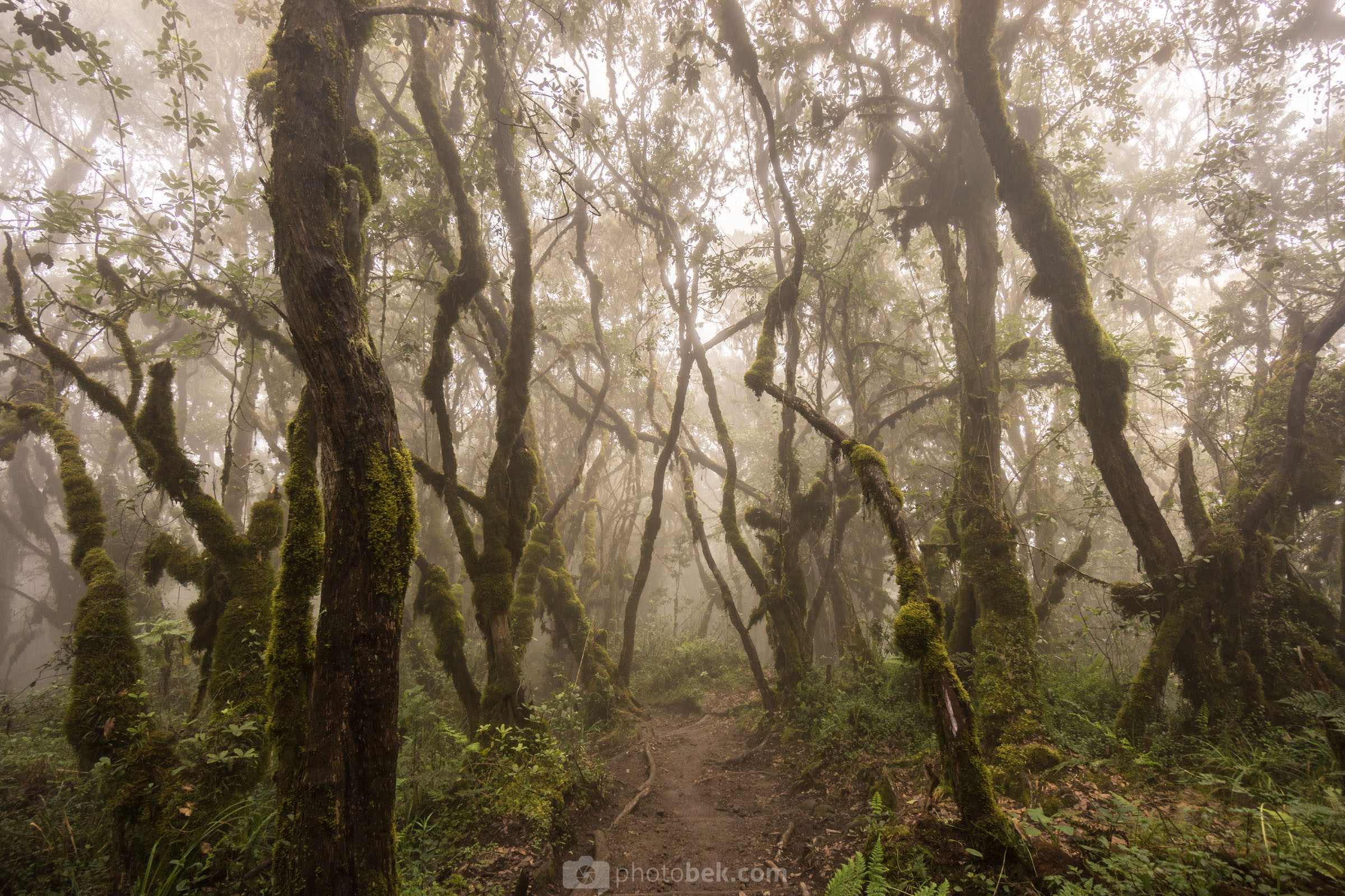 "Best of 2015 #4 - ""Enchanted Forest"""